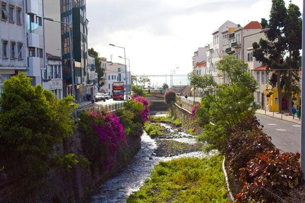 Blumen in Funchal