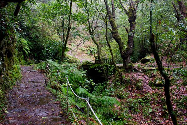 Levada Wanderung auf Madeira im Wald