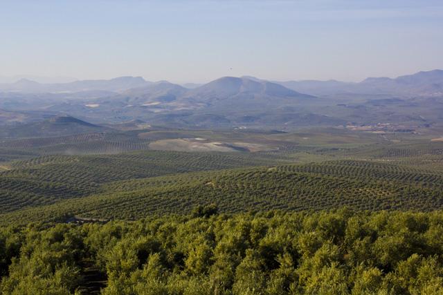 Hügel in Andalusien mit Wein