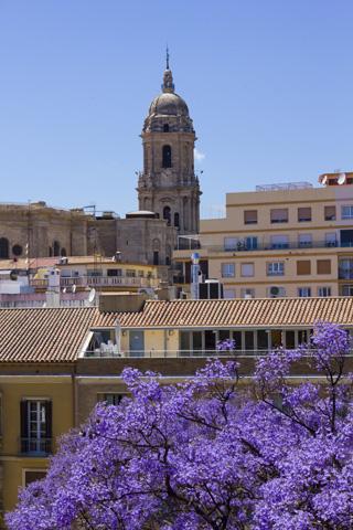 Malaga Kirche Jacaranda Baum
