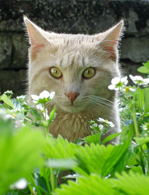 Fokus Haku in den Erdbeeren Fotografie-Tipps