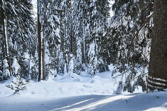 Mitten im Wald bei der Winterwanderung am Schliersee