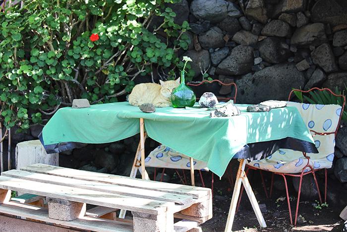 Katze auf Gran Canaria in der Einsiedelei