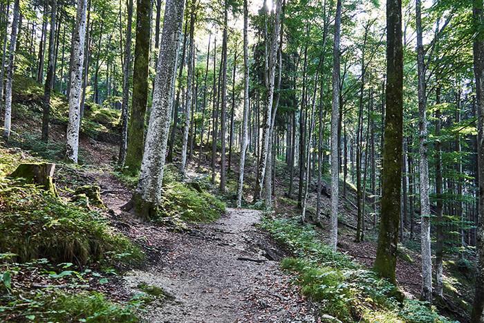 Wandern für Anfänger im Wald