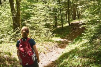 Packliste Wandern Tagestour Wald