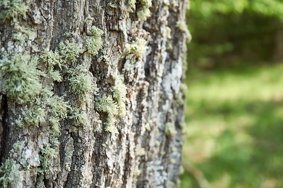 Umwelt schützen durch nachhaltige Outdoor Bekleidung