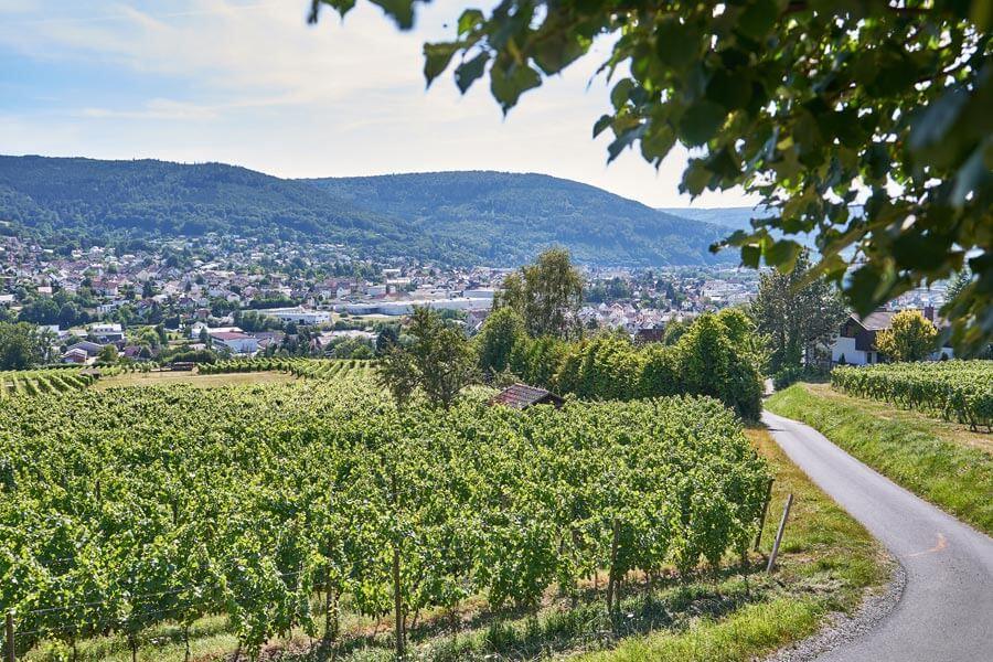 Fränkischer Rotweinwanderweg mit Weinreben