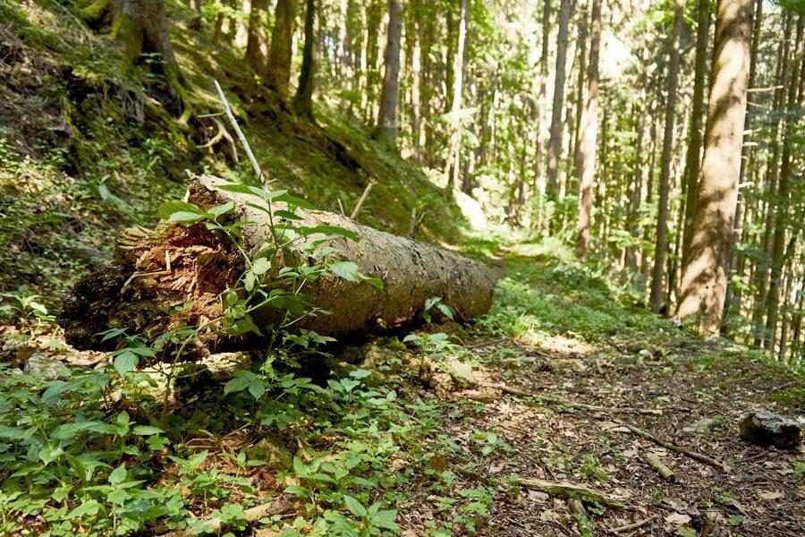 Tour durch den Wald