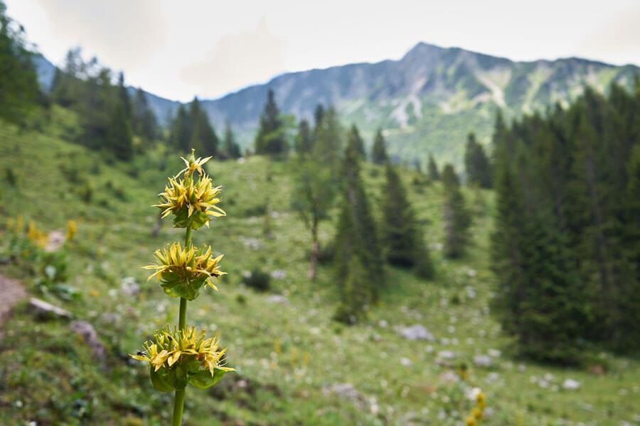Wildblume und nachhaltig wandern