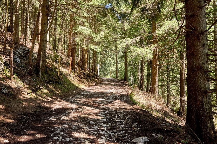 Waldweg zum nachhaltigen Wandern